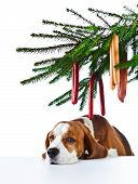 image of sad christmas  - Sad holiday at a lonely dog white background - JPG