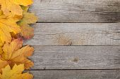 Colorful autumn maple leaves on wooden table background