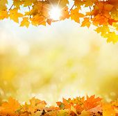 pic of fall decorations  - autumn background - JPG
