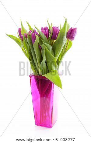 Pink Dutch Tulips In Vase