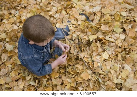 Boy Sittion In Leaves