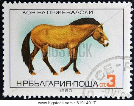 BULGARIA - CIRCA 1980: A stamp printed in Bulgaria shows Przewalski's Horse circa 1980