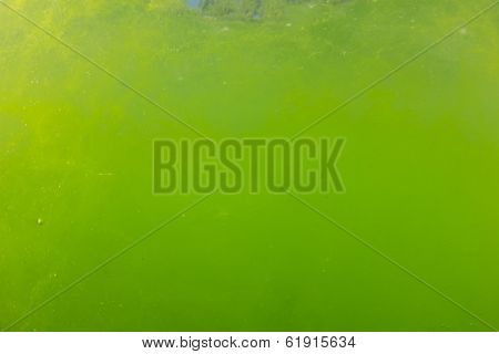 Algae Bloom Underwater due to Global Warming and Pollution