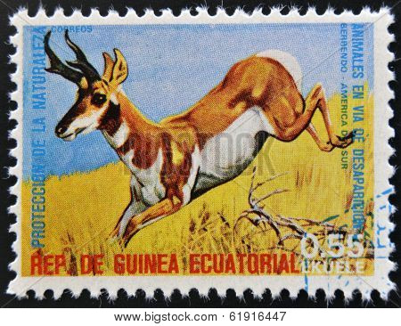 EQUATORIAL GUINEA - CIRCA 1974: Stamp printed in Guinea shows Pronghorn South America
