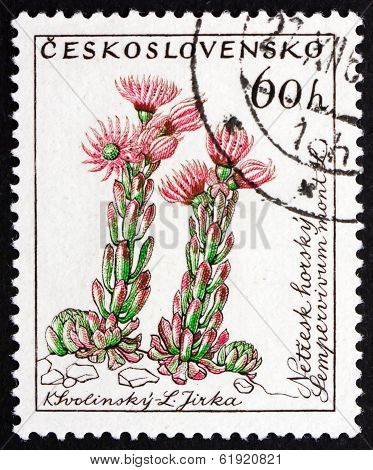 Postage Stamp Czechoslovakia 1960 Hen And Chicks, Flowering Plan