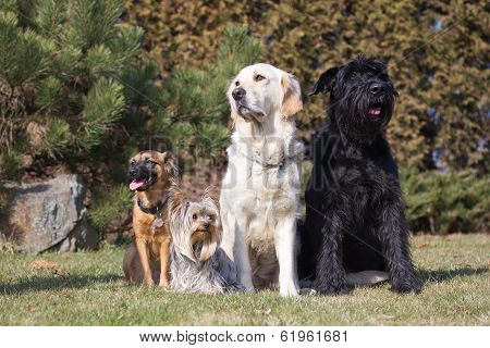 Group of dogs in the garden