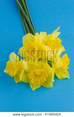 Jonquil Flowers
