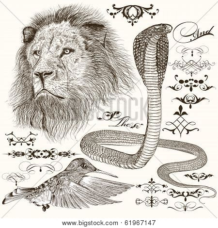 Set Of Hand Drawn Detailed Animals And Flourishes In Vintage Style