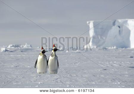 Antarctic Christmas