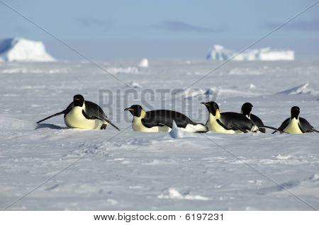 Antarctic Penguin Procession