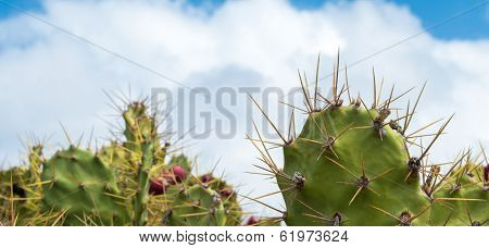 Spikey Cactus And Clouds