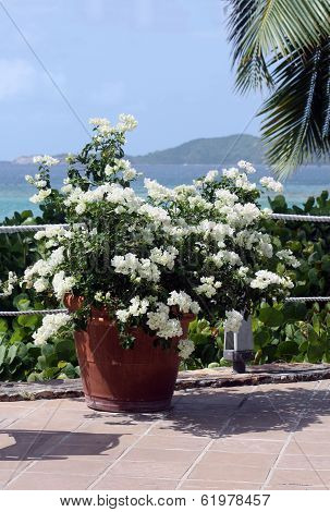Flower Arrangement On Caribbean Background