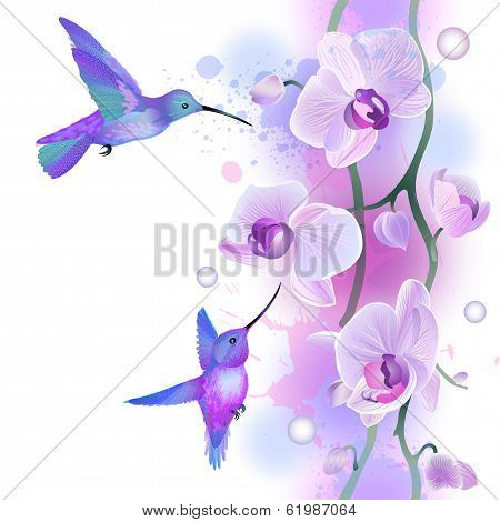 Seamless ornament with orchids and humming birds