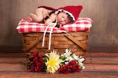 pic of little red riding hood  - 14 day old newborn baby girl dressed as Little Red Riding Hood and sleeping on a vintage wooden picnic basket surrounded with flowers - JPG