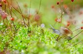 foto of garden snail  - Snails and moss macro shot in the garden or forest