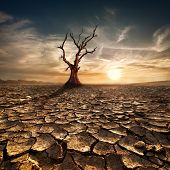 picture of lonely  - Global warming concept - JPG