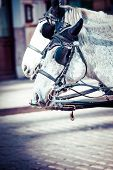 stock photo of hackney  - Traditional horse - JPG