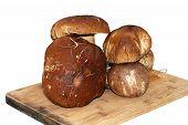 stock photo of porcini  - mushroom  - JPG