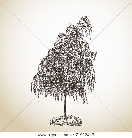 Isolated tree Vector Sketch Hand drawn illustration