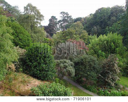 Garden Tree Landscape