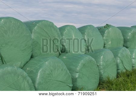 Wrapped Silo Bales