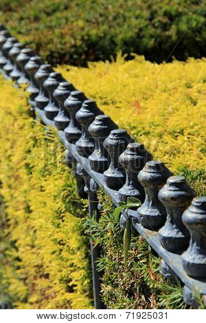 Wrought iron fence and shrubs