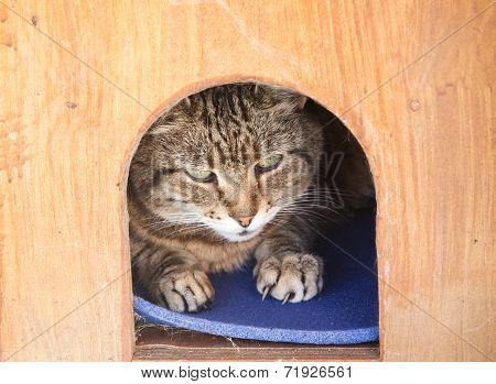 Cat In A Kennel