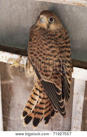 Falcon Bird Photo Texture
