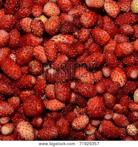 Background of forest strawberries