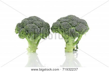 Two ripe broccoli.