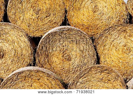 Sheaves Of Hay In A Field In Sunshine