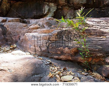 Young Tree Growing in Rocks