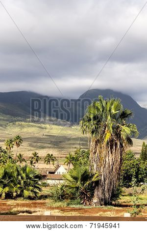 Palm Tree Against The West Maui Mountains