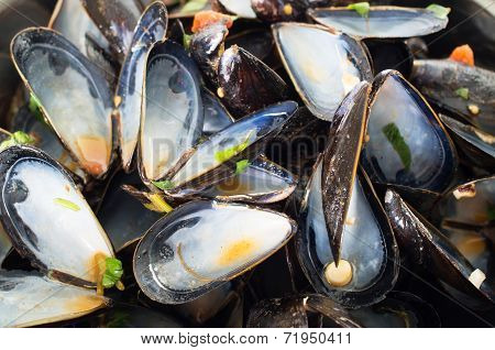 Empty Mussel Shells