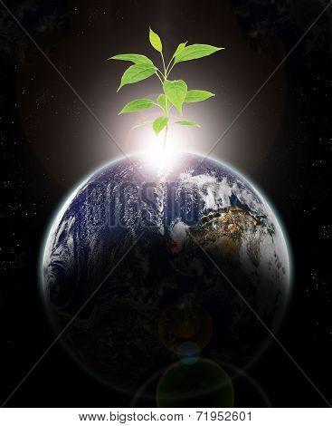 New Ecologic Era Rising
