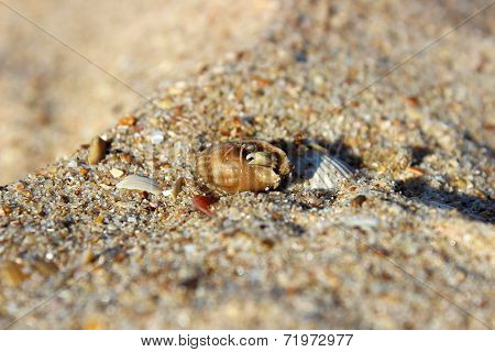 Small Hermit Crab