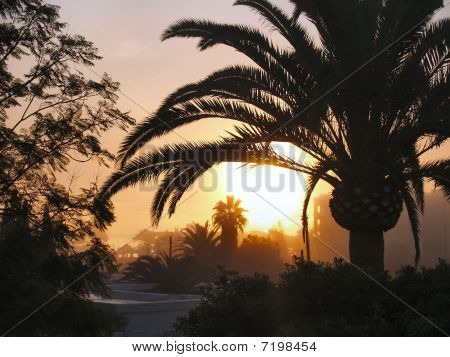 Ibiza sunset through palm trees