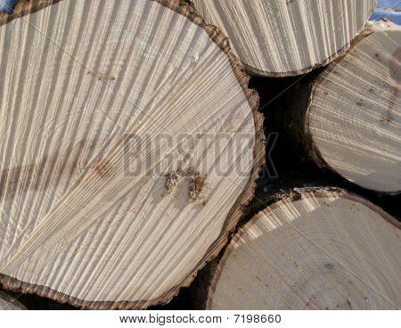 Espe Holz Protokolle