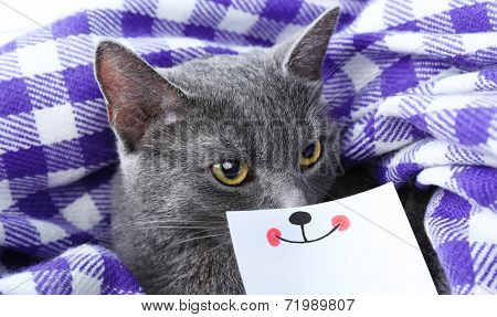 Cat on purple blanket closeup