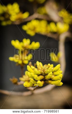 Yellow Flowers Bloom In Spring