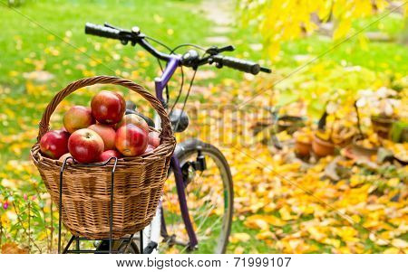 Apples In The Wicker Basket