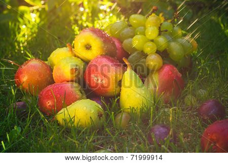 Sad Autumn Fruits Grass Sunshine