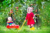 picture of hand-barrow  - Happy little children cute toddler girl and adorable funny baby boy playing together in a beautiful fruit garden eating apples having fun on a wheel barrow ride enjoying a warm autumn day outdoors - JPG