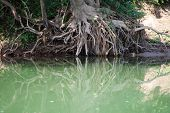 stock photo of ou  - Tree root with water reflexion at the river Nam Ou in Laos - JPG
