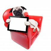 foto of pug  - pug dog sitting on red sofa relaxing and resting while holding a tablet pc computer screen or digital display isolated on white background - JPG