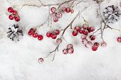 picture of berries  - Christmas branch with berries on snow background - JPG
