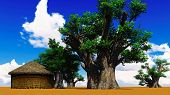 pic of baobab  - African village With baobabs and hut - JPG