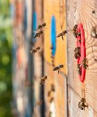 stock photo of bee-hive  - close arrival of bees in the hive - JPG