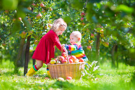 foto of hand-barrow  - Happy little children toddler girl and funny baby boy brother and sister playing together in a beautiful fruit garden eating apples next to a big basket on a warm autumn day outdoors - JPG