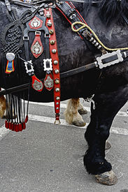 stock photo of workhorses  - Horse ready for the parade with harness of decorations - JPG